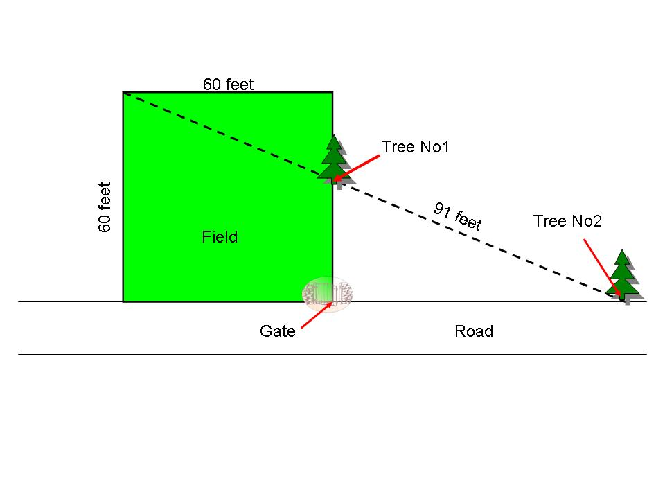 Tree and Road Jpeg