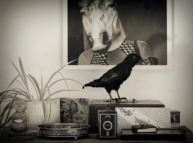 Still life with horse, bird and camera
