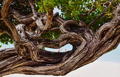 Smiling tree..