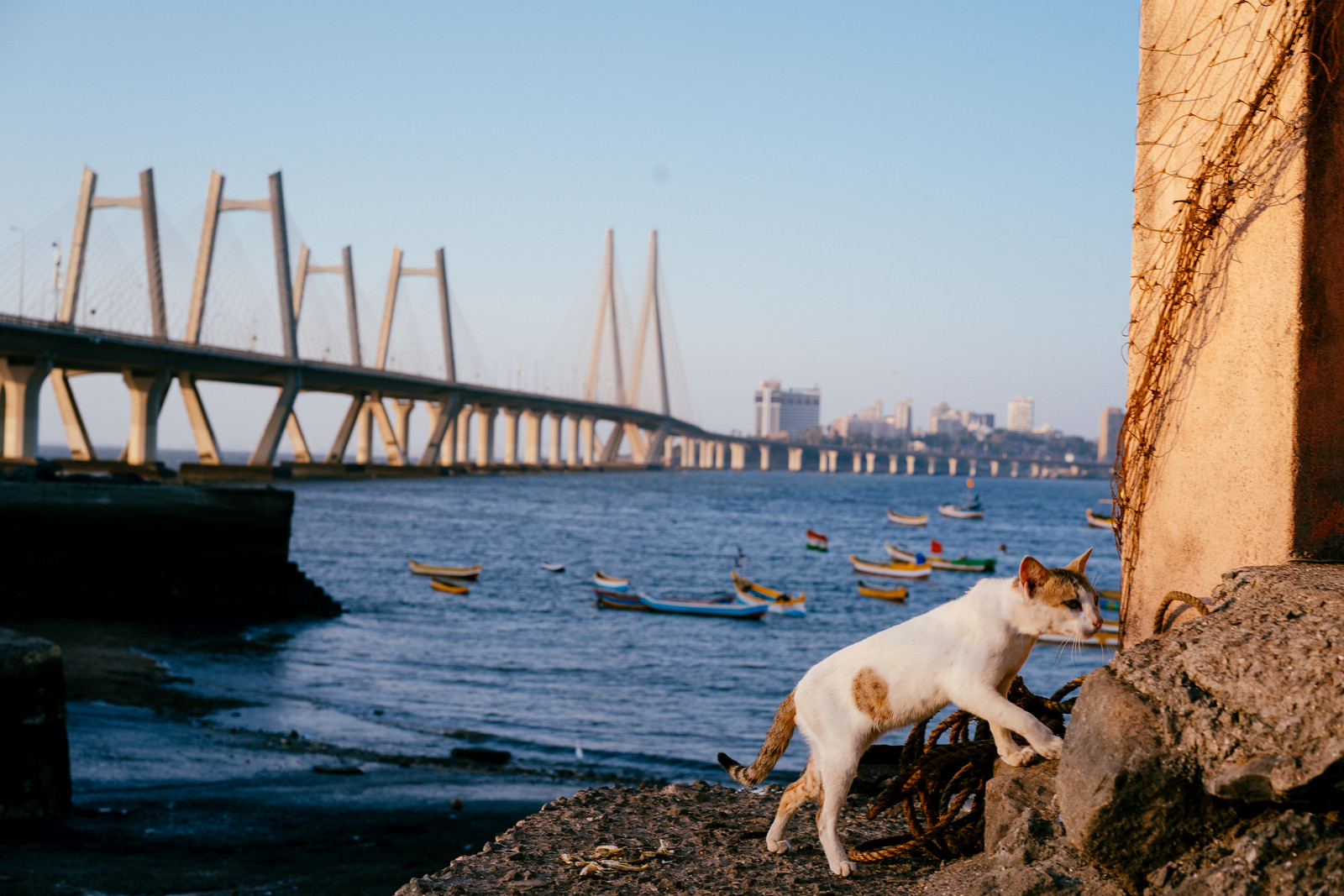 Mumbai Meow