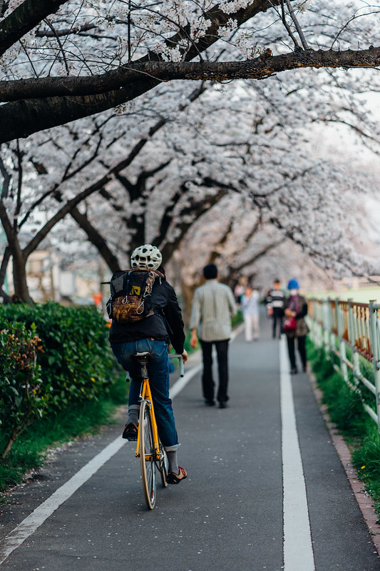 CherryBlossoms_46