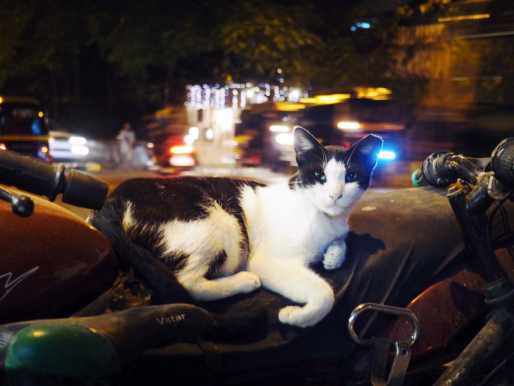Cat Sleeping on Motorcycle Mumbai Streets _effected