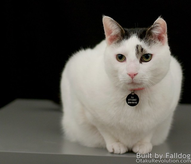 MG Cat 8