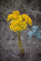 Long stilk with flowers