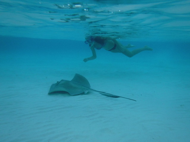 Sarah Swimming with Stingray