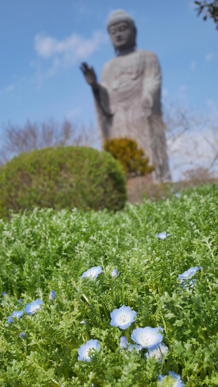 花と牛久大仏