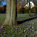 Spring in Ashton Park
