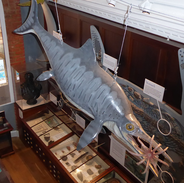 Model of Ichthyosaur above Geology Gallery, Lyme Regis Museum