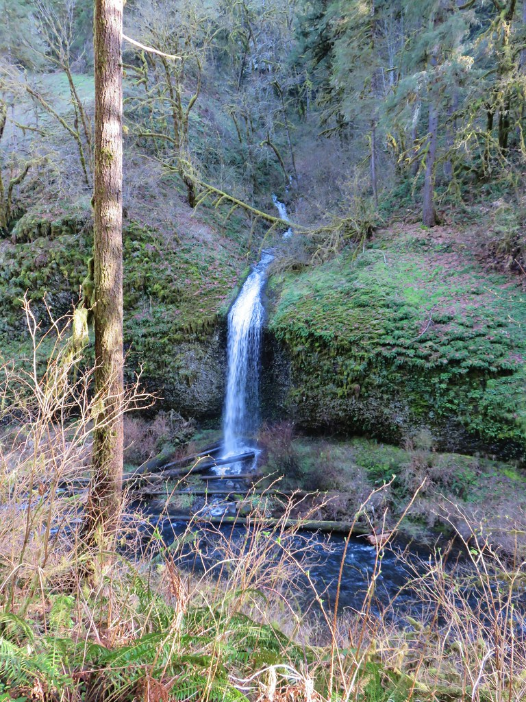Unnamed waterfall in Silver Falls State Park