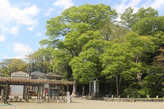 haijimahiyoshi-gosyuin04005