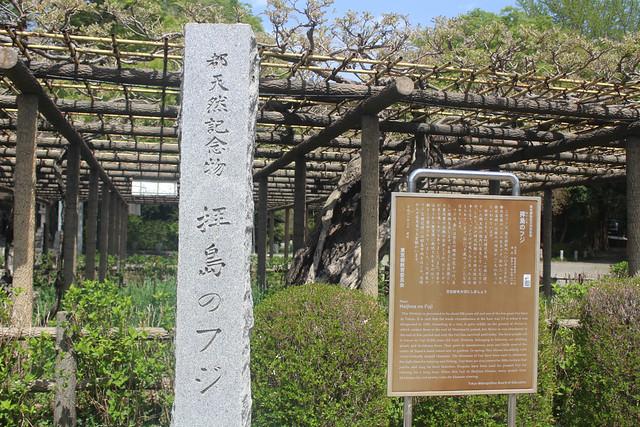 haijimahiyoshi-gosyuin04003