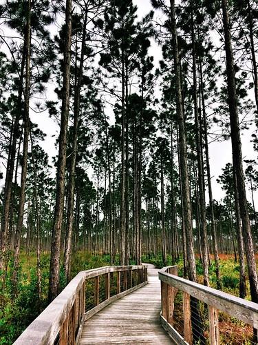 panamacitybeach florida conservationpark