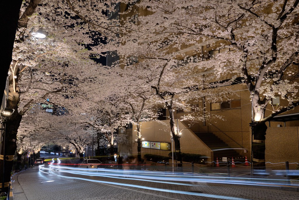 Cherry blossoms at Roppongi