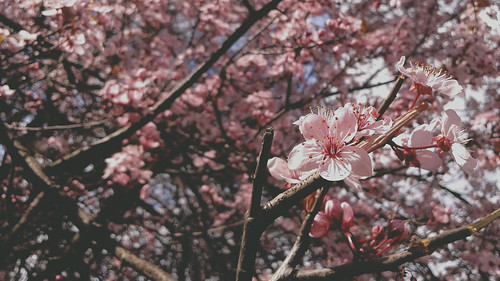 photography sabanovicphotography nature edit throughherlens spring flowers trees blossom pink wilderness beauty landscape shadow sky photoshop leaves light
