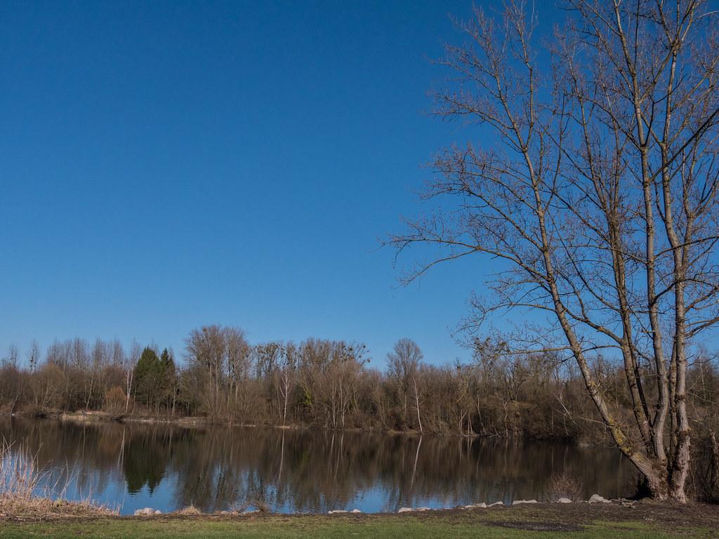 Au bord de l'étang... + recadrage 40860339051_3591734fc2_b