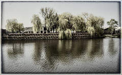 Trees waterside reflection.