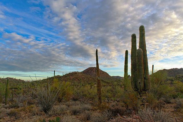 DSC_0359-361 saguaro west hdr 850