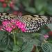 Butterfly - NHM (42)