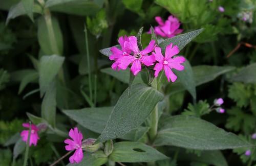 les jardins sont beaux en mai ! 27059886157_30bdf53795