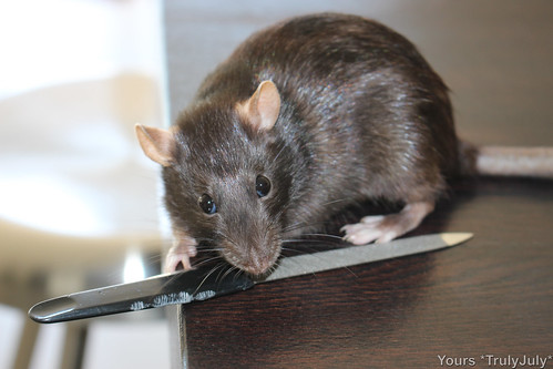 #CleverRat: Skavin turns out to be a nail file thief! ;)