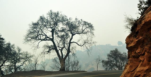 Burned Tree on Dennison Grade