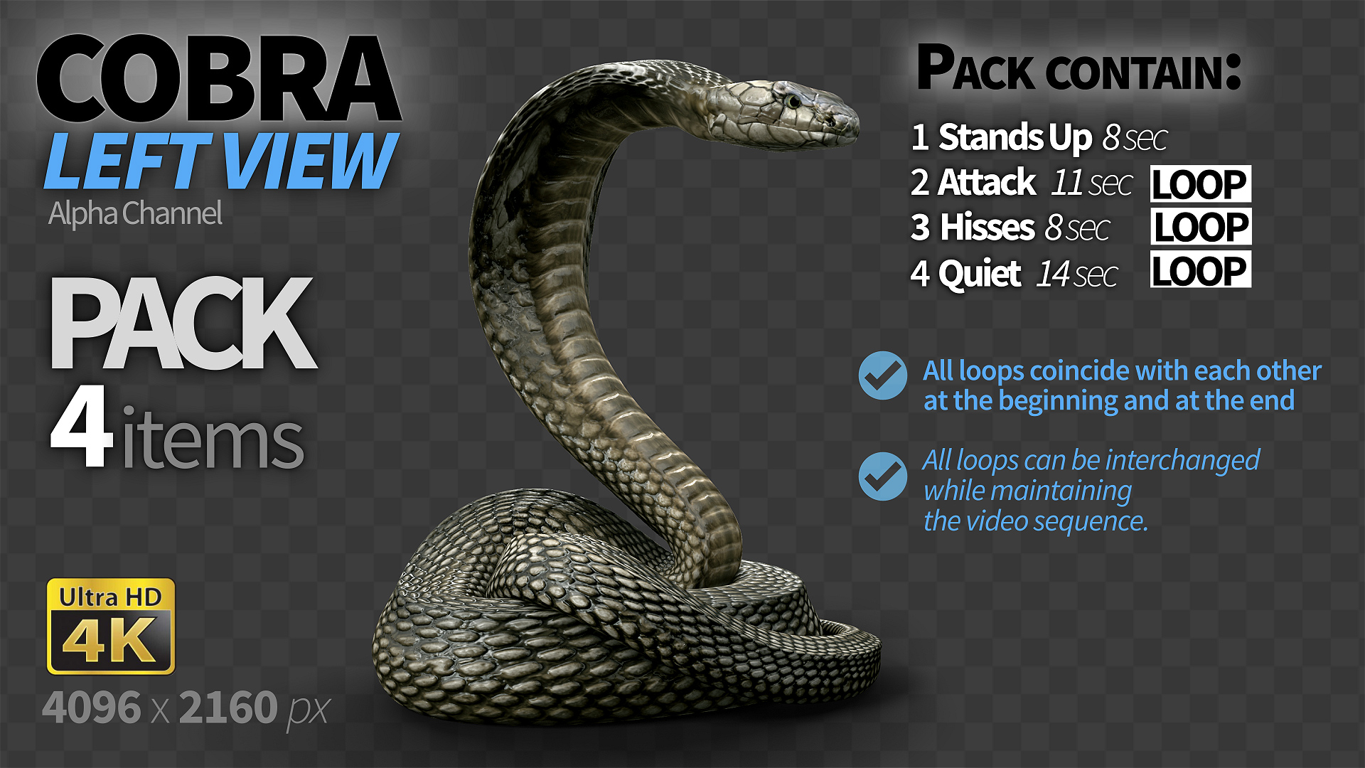 Cobra left view quiet by cglight | videohive.
