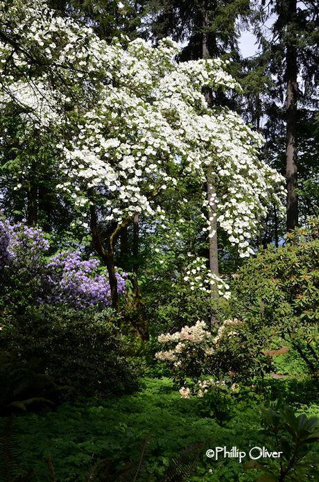 cecil-smith-garden-22