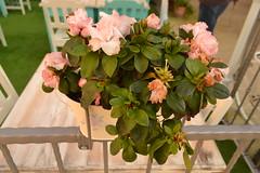Cvijeće u Fažani (122FAITH_7446)
