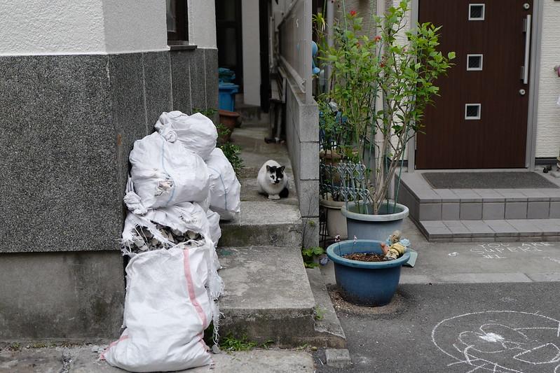 Leica Q雑司ヶ谷鬼子母神西参道路地の猫