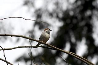 20120325-Spring 6 - bird