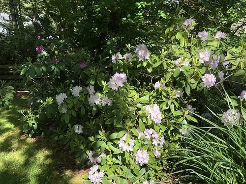 Spring garden — Corvallis