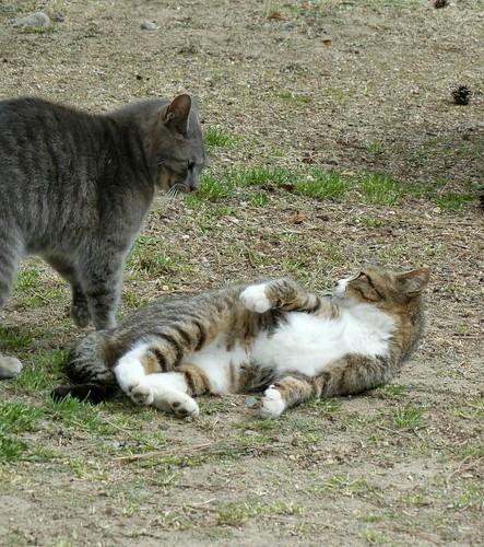 姫路城の見どころと混雑 姫路公園の猫