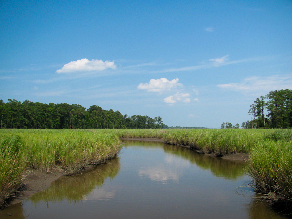 Salt marshes along Jamestown Island. The ample wetlands on the island proved to be a breeding ground for mosquitoes. Photo taken on July 20, 2010.
