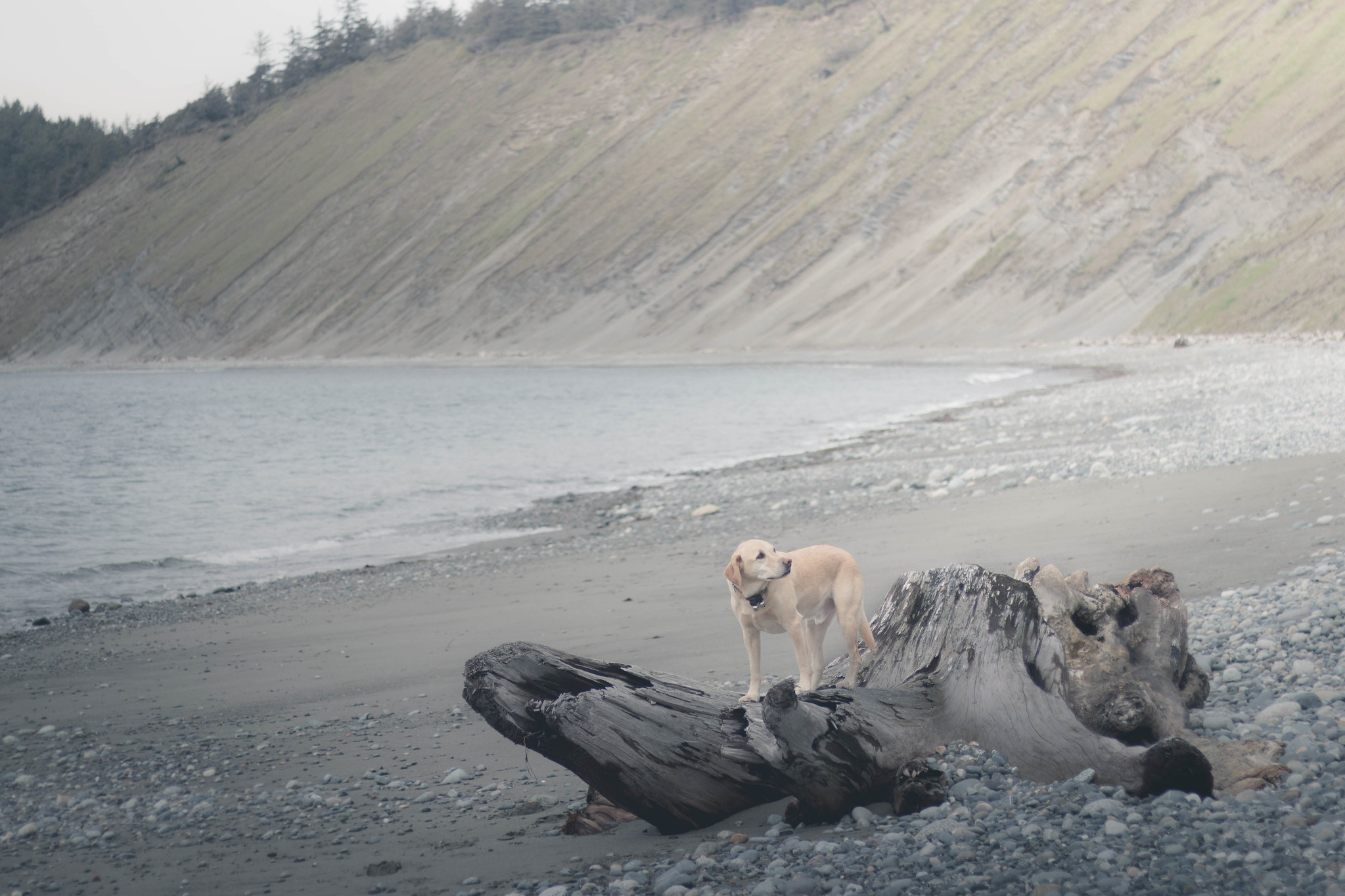Water dogs at Ebey's Landing