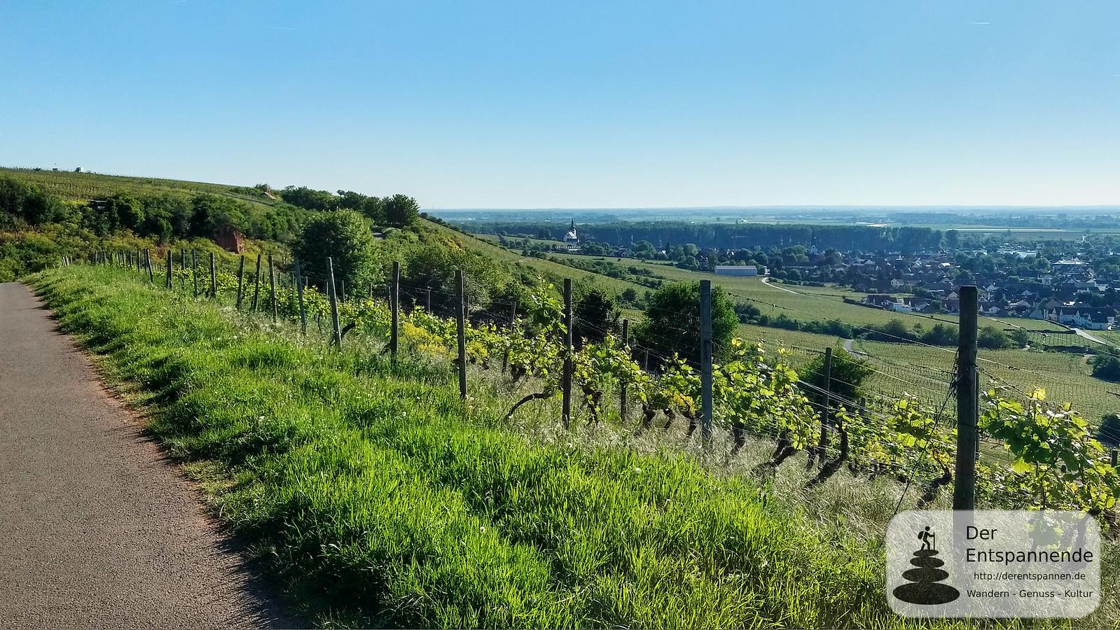 Blick auf Nierstein und Rhein