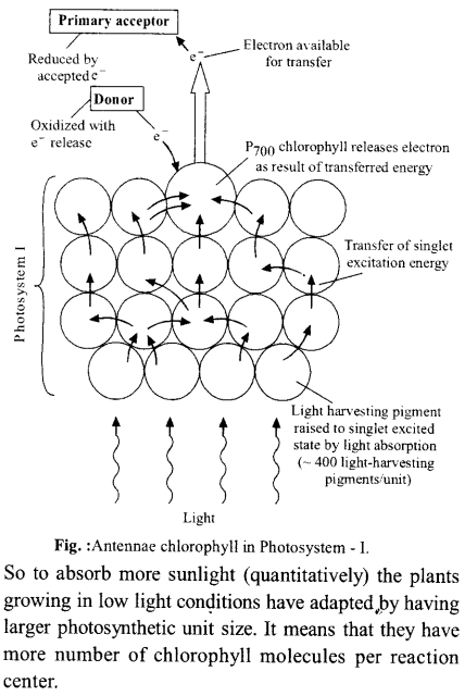 neet-aipmt-biology-chapter-wise-solutions Photosynthesis in Higher Plants - 26 explenation