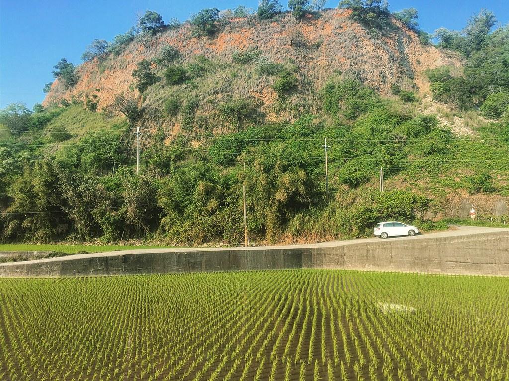 台中景點 一大片稻田,車輛沿田埂停放,看得出來遊客倒是不少