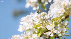 Spring freshness