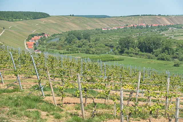 Weininsel im Mai