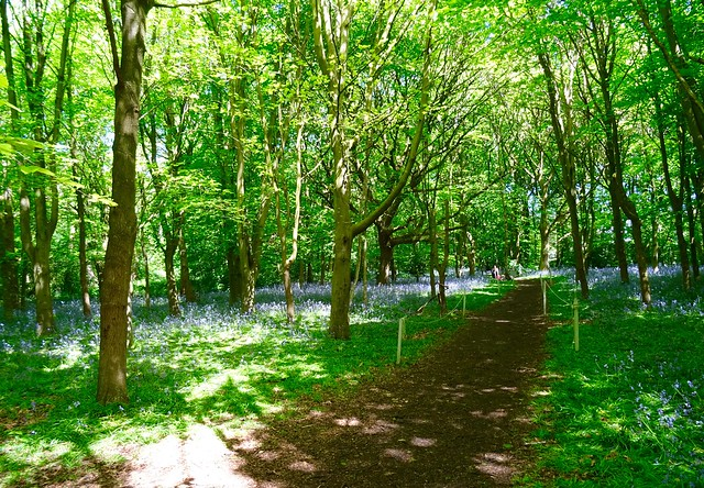 Bluebell walk, Speke Hall, Sony DSC-HX60, Sony 24-720mm F3.5-6.3