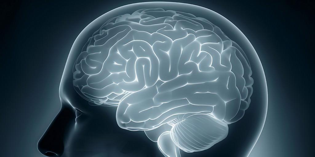 Un capteur IRM à base de calcium permet une imagerie cérébrale plus précise