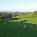 View from Miserden (3)