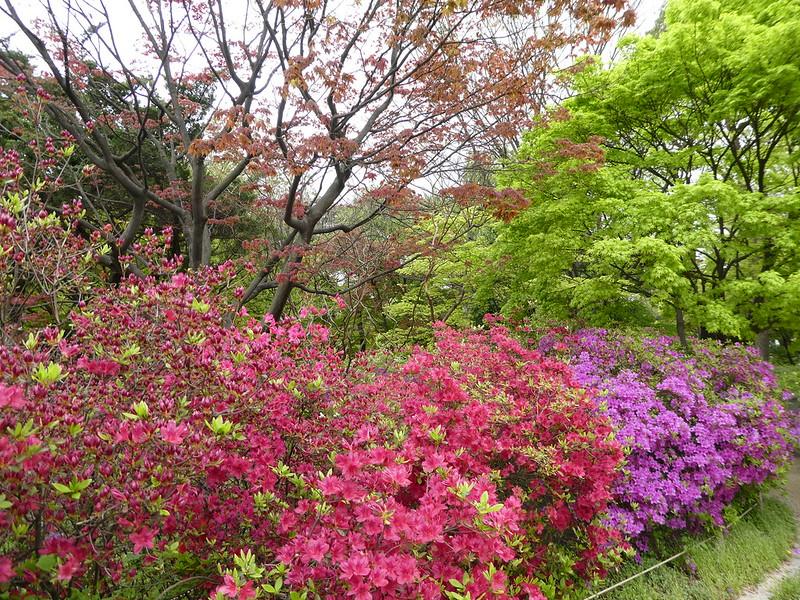 Changdeokgung Palace Garden, Seoul