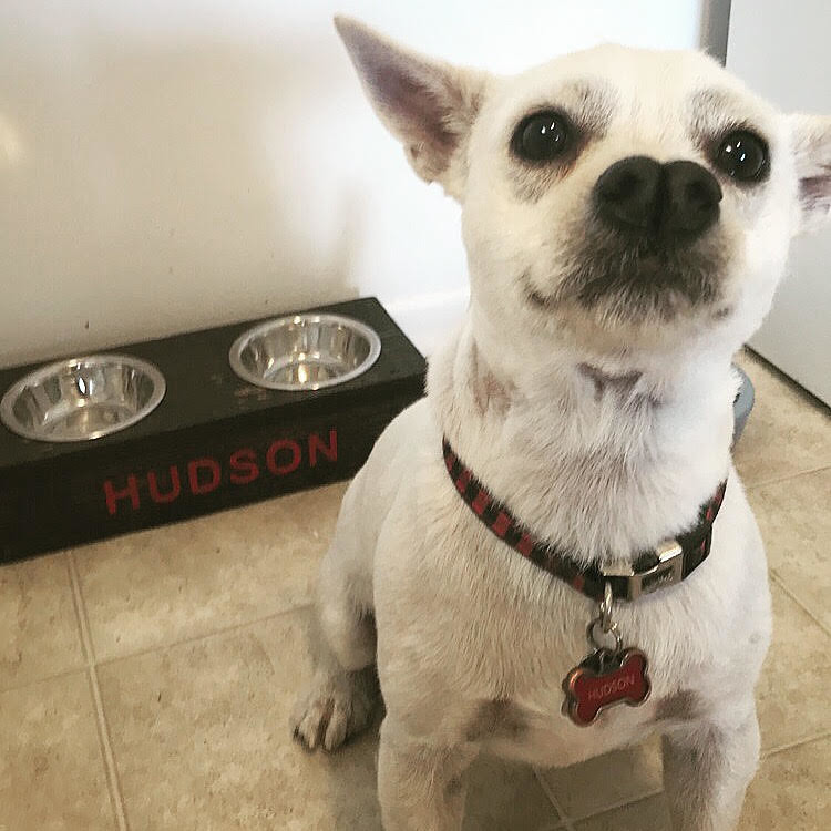 Pet Selfie - Hudson