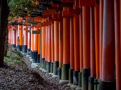 Torii Gates - Kyoto
