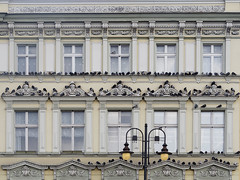 The one and only Official Pigeon Theater. Bydgoszcz, Poland