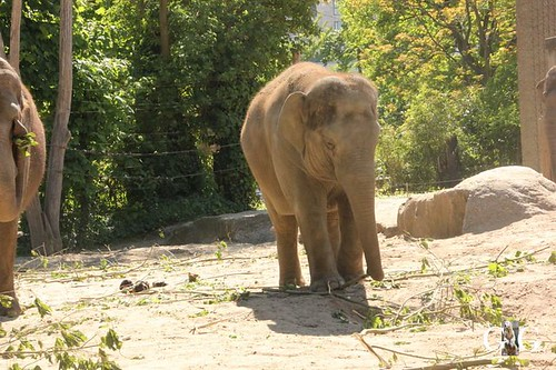 Besuch Zoo Berlin am 06.05.201859