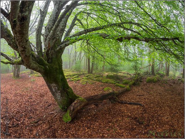 Reverencia al bosque