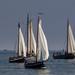 Pentecost sail, Hellevoetsluis