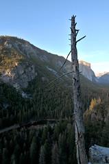 Yosemite Valley | Yosemite National Park, California